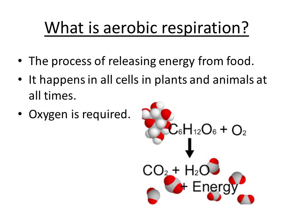 What is aerobic respiration