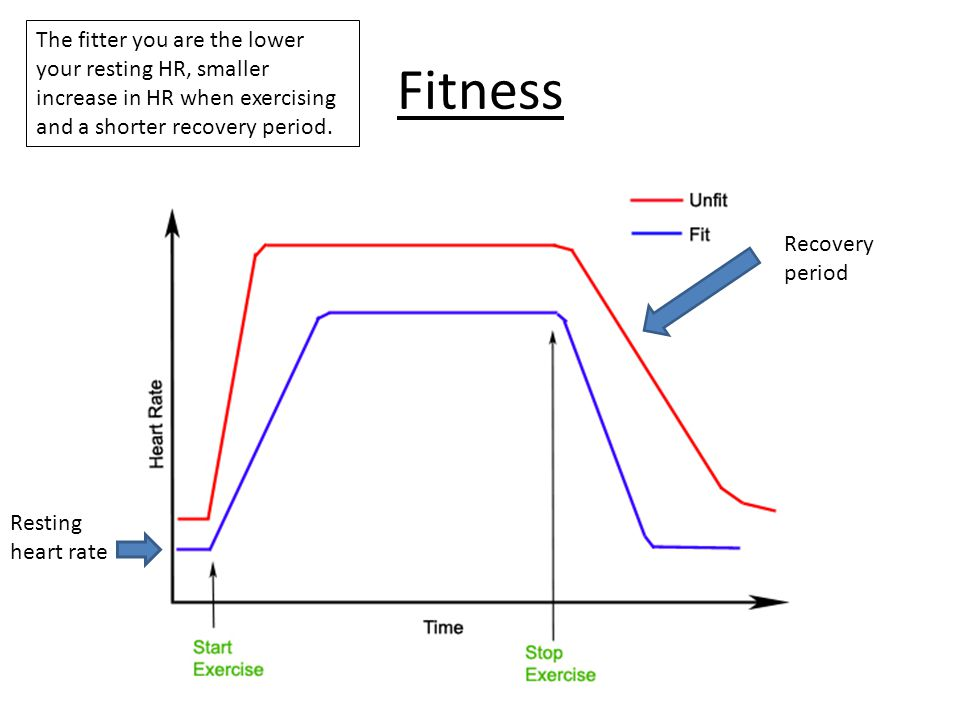 The fitter you are the lower your resting HR, smaller increase in HR when exercising and a shorter recovery period.