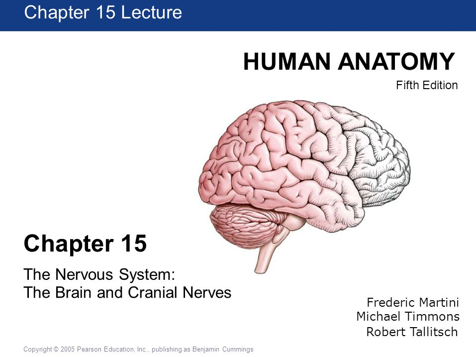 Human Anatomy Chapter 15 Chapter 15 Lecture The Nervous System