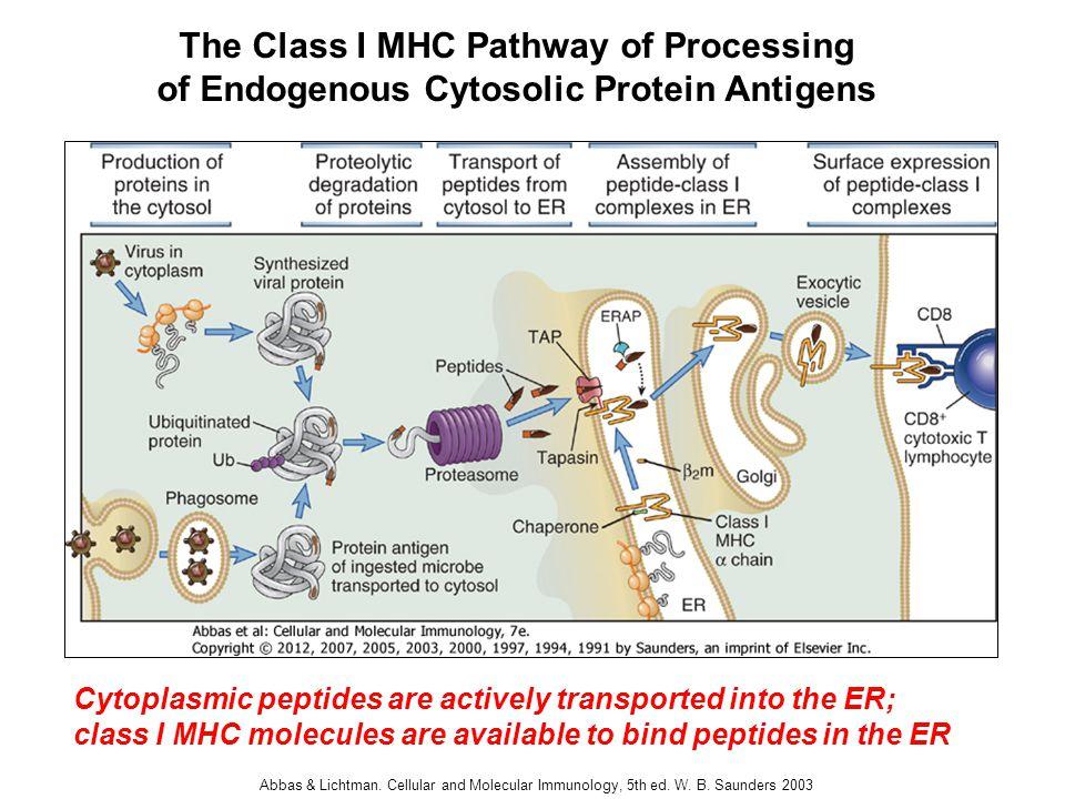 cellular and molecular immunology pdf download