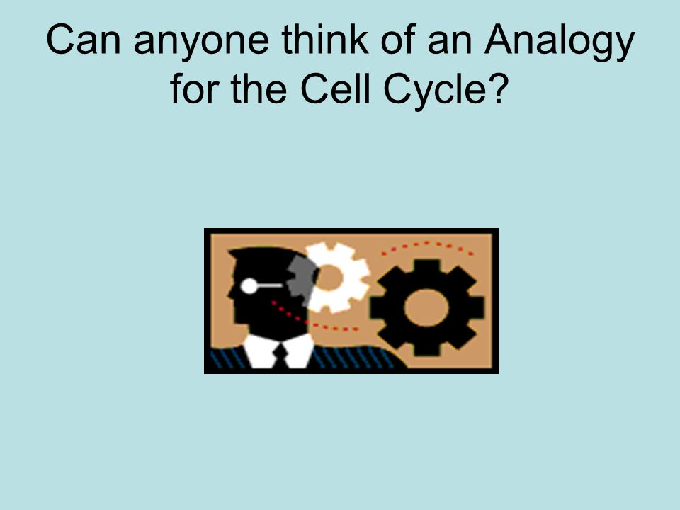Can anyone think of an Analogy for the Cell Cycle