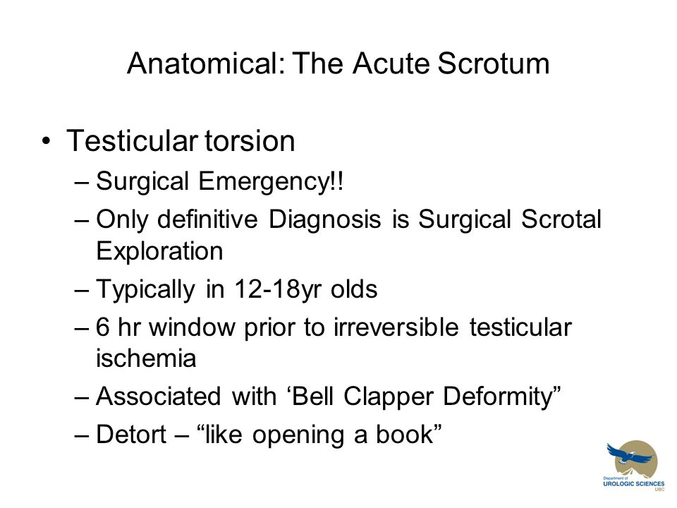 Anatomical: The Acute Scrotum