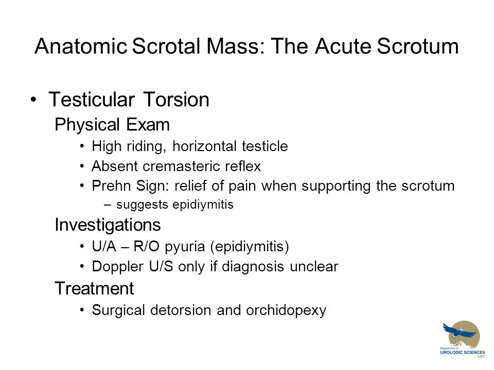 Anatomic Scrotal Mass: The Acute Scrotum