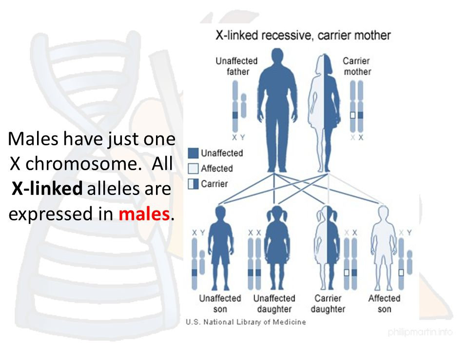 Males have just one X chromosome