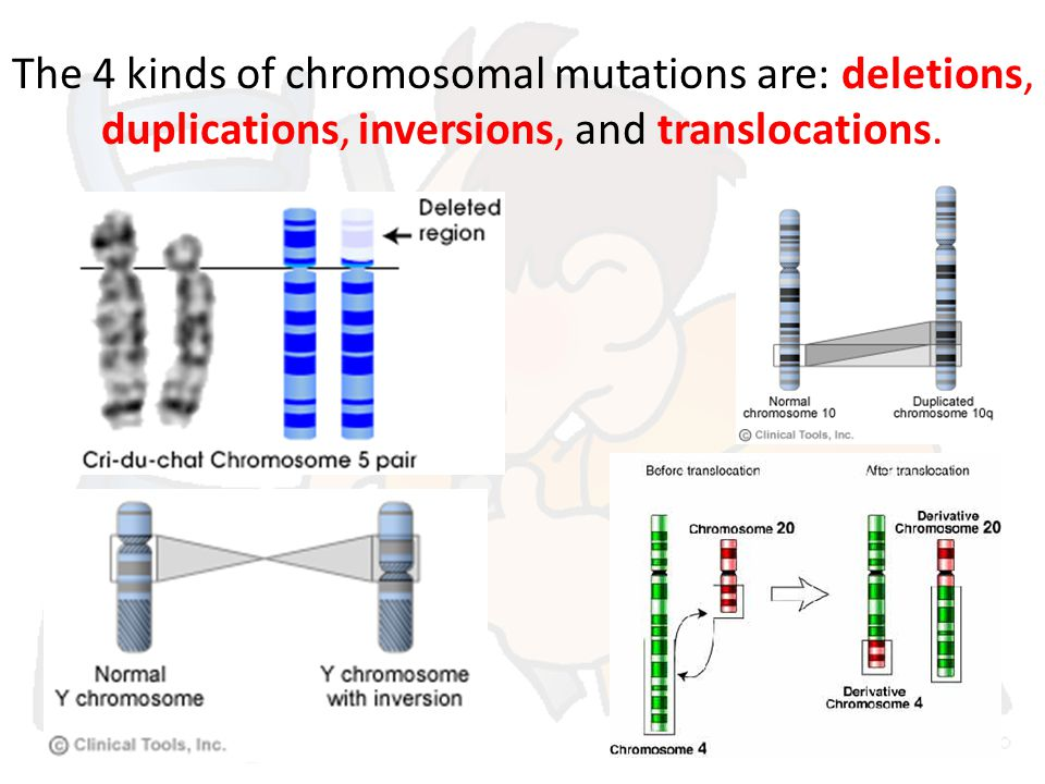 The 4 kinds of chromosomal mutations are: deletions, duplications, inversions, and translocations.