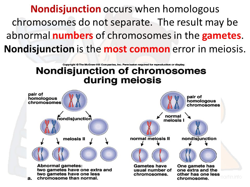 Nondisjunction occurs when homologous chromosomes do not separate