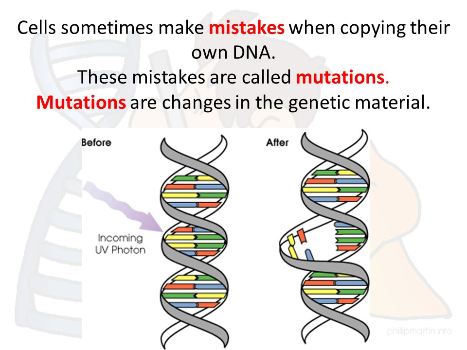 Cells sometimes make mistakes when copying their own DNA