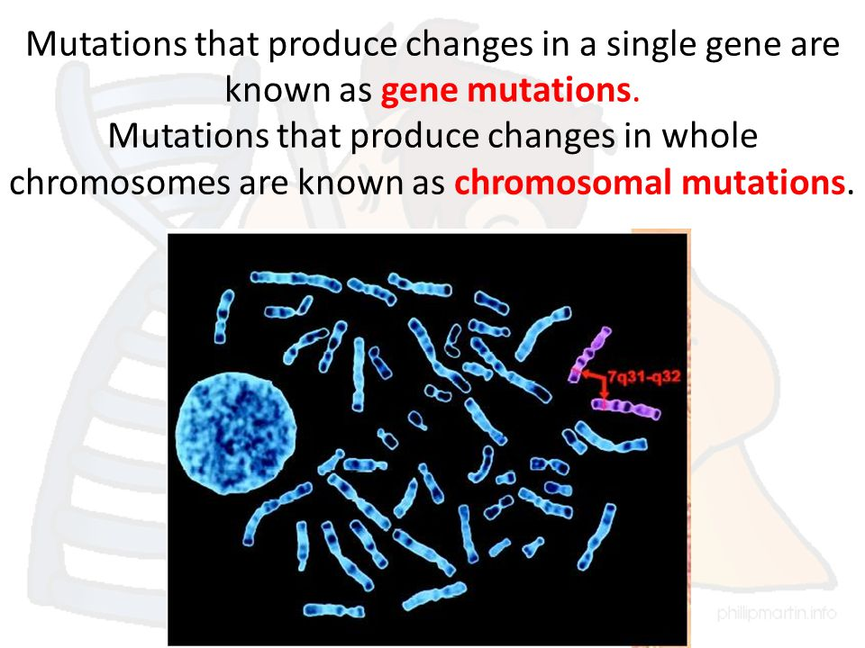 Mutations that produce changes in a single gene are known as gene mutations.