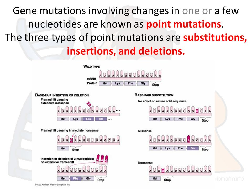 Gene mutations involving changes in one or a few nucleotides are known as point mutations.
