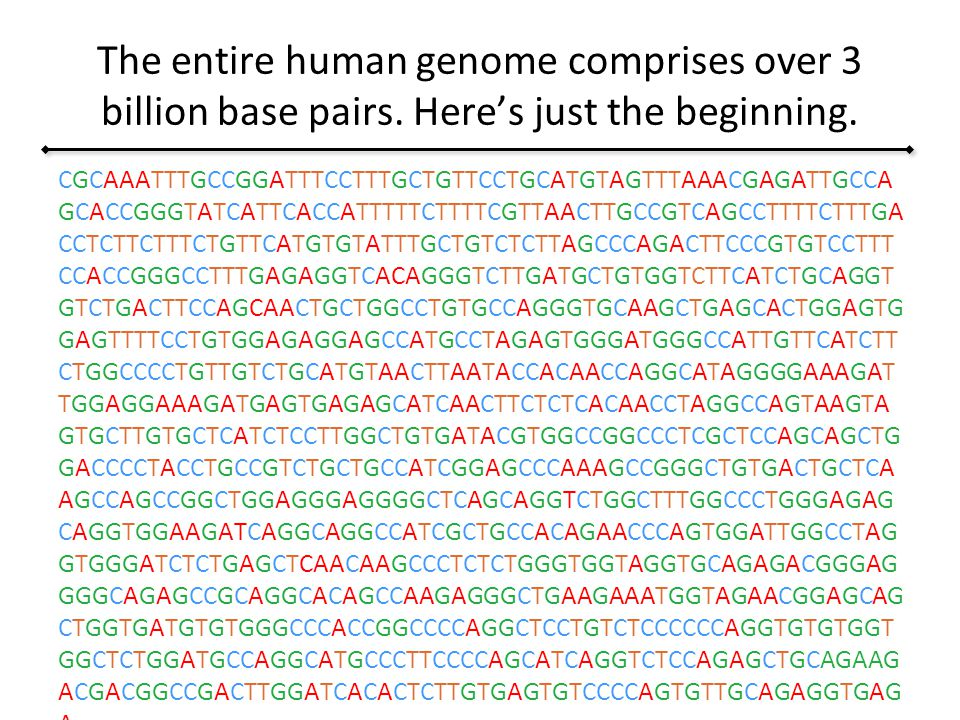 The Entire Human Genome Comprises Over 3 Billion Base Pairs