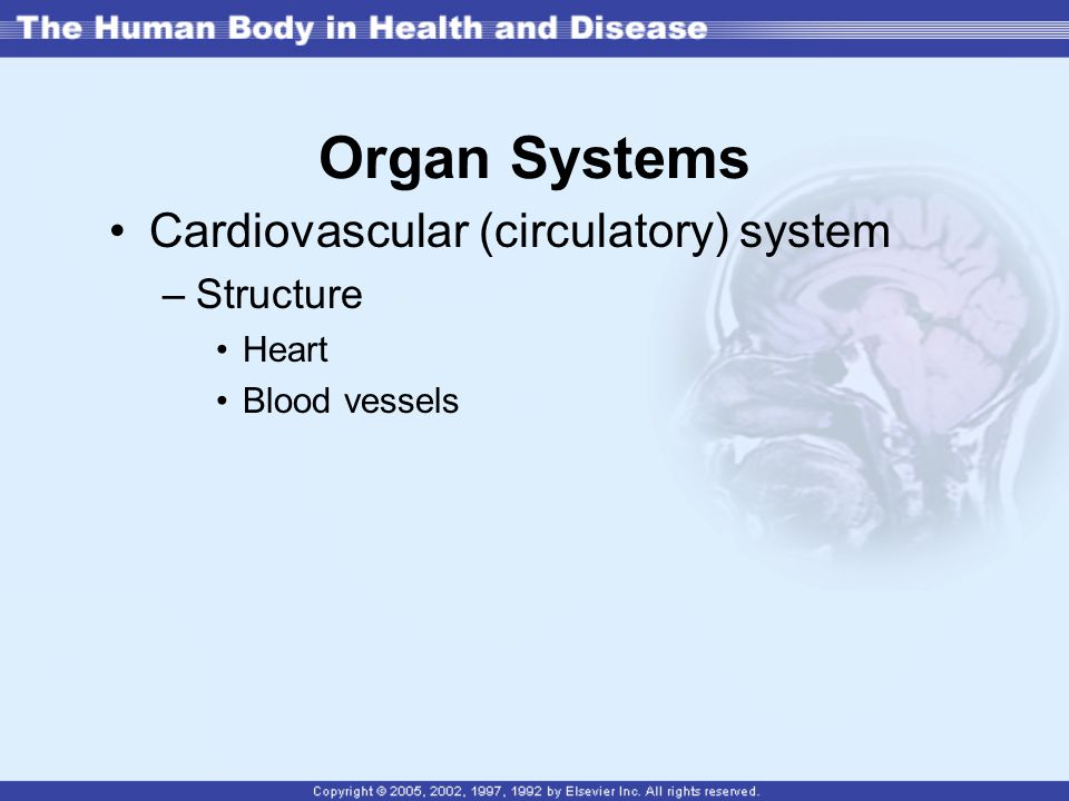 Organ Systems Cardiovascular (circulatory) system Structure Heart