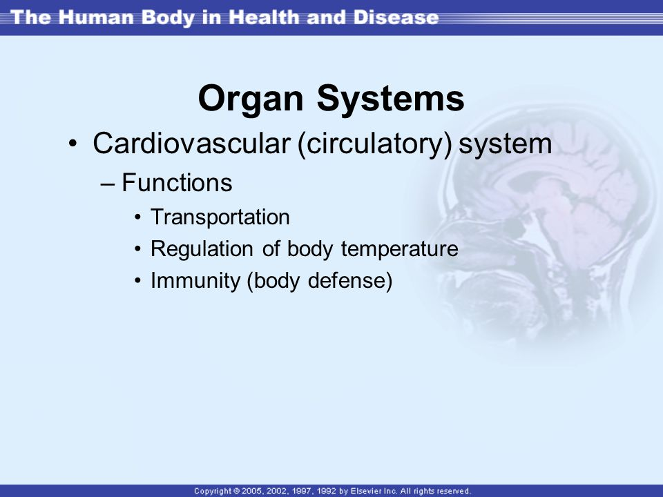 Organ Systems Cardiovascular (circulatory) system Functions