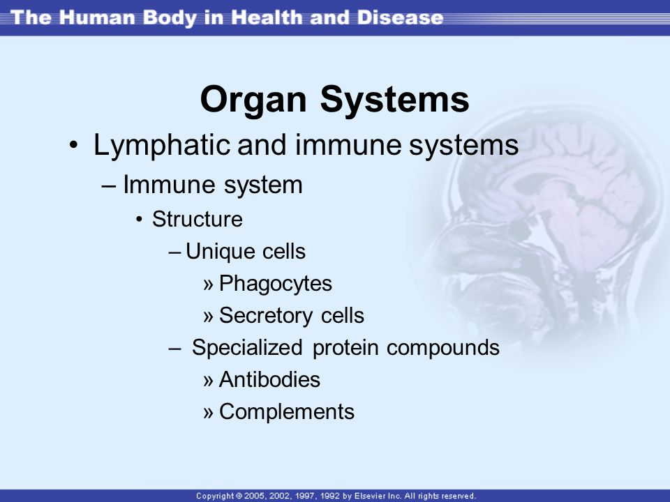 Organ Systems Lymphatic and immune systems Immune system Structure