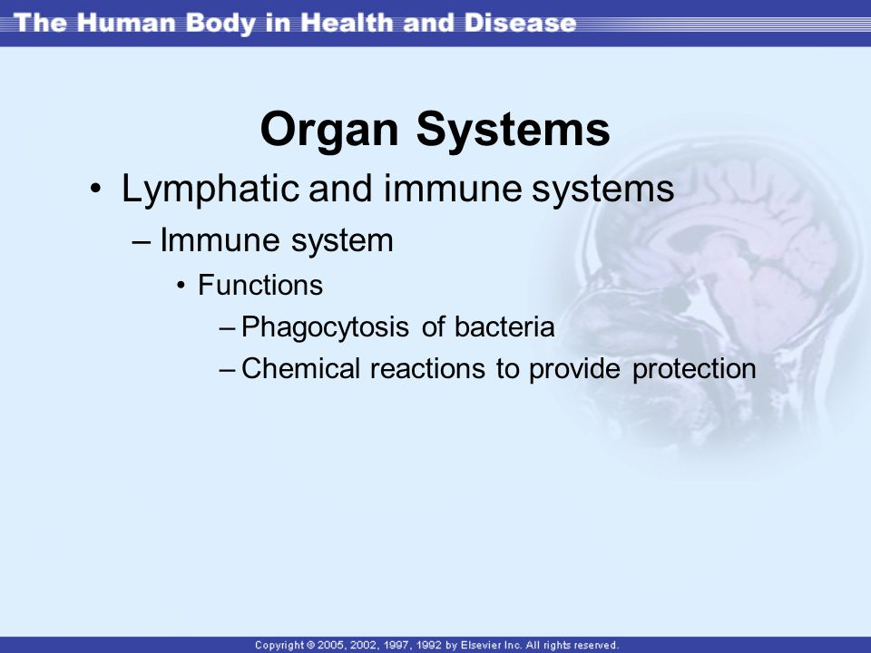 Organ Systems Lymphatic and immune systems Immune system Functions