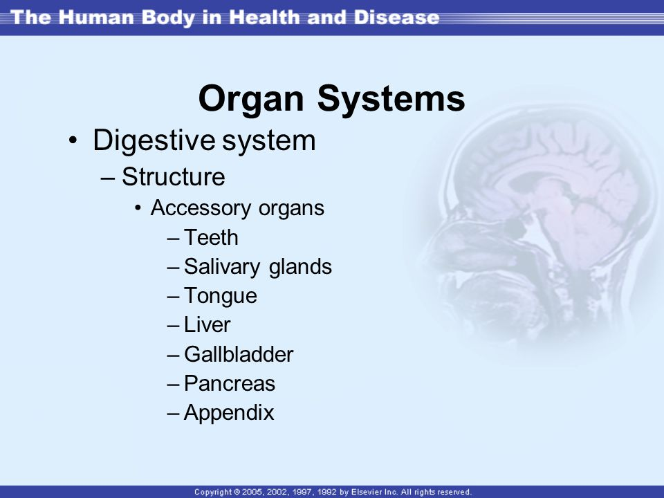 Organ Systems Digestive system Structure Accessory organs Teeth