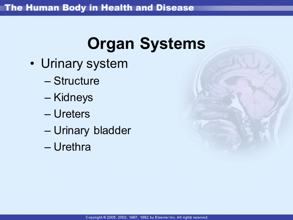 Organ Systems Urinary system Structure Kidneys Ureters Urinary bladder