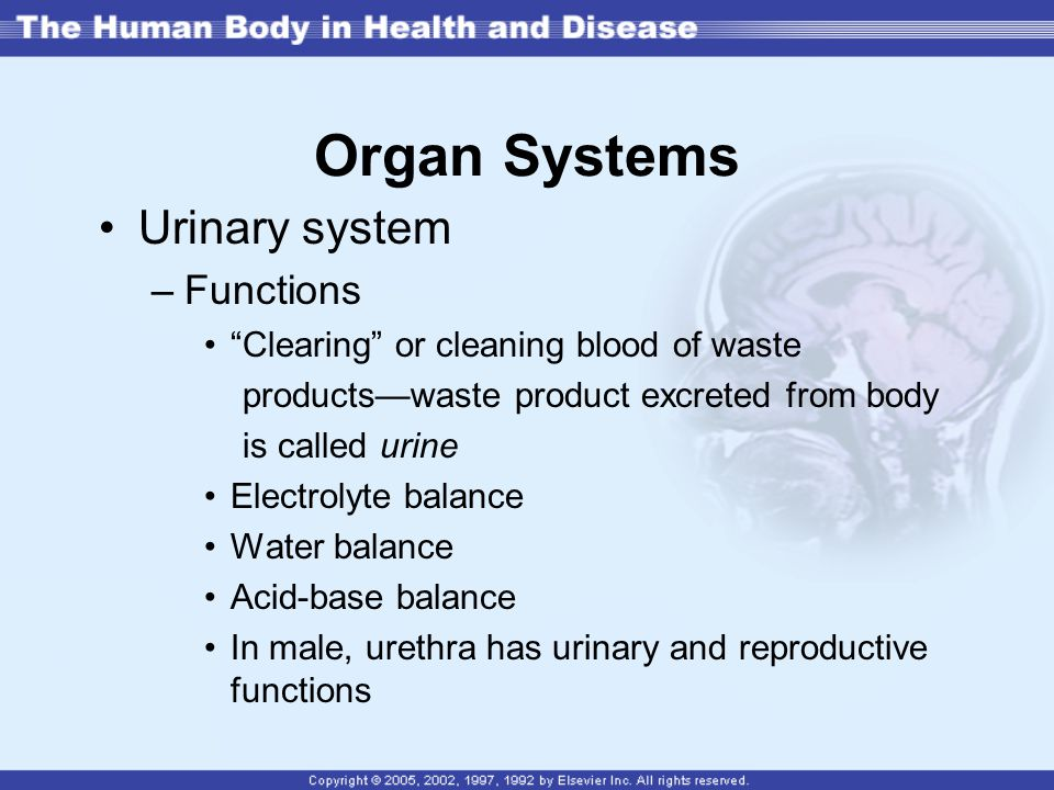 Organ Systems Urinary system Functions