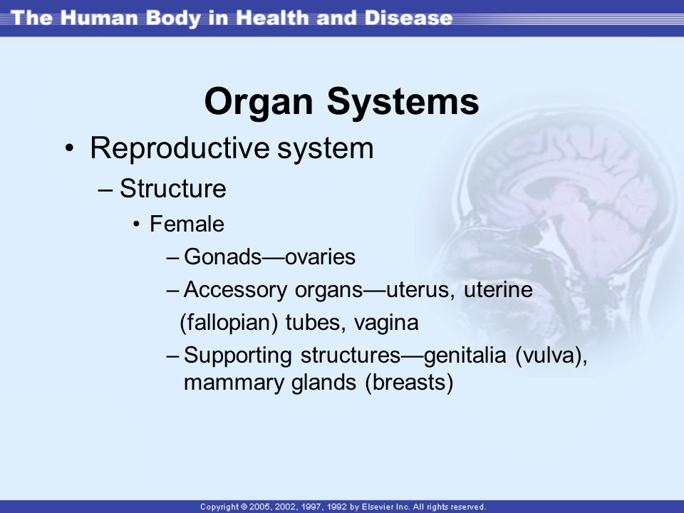Organ Systems Reproductive system Structure Female Gonads—ovaries