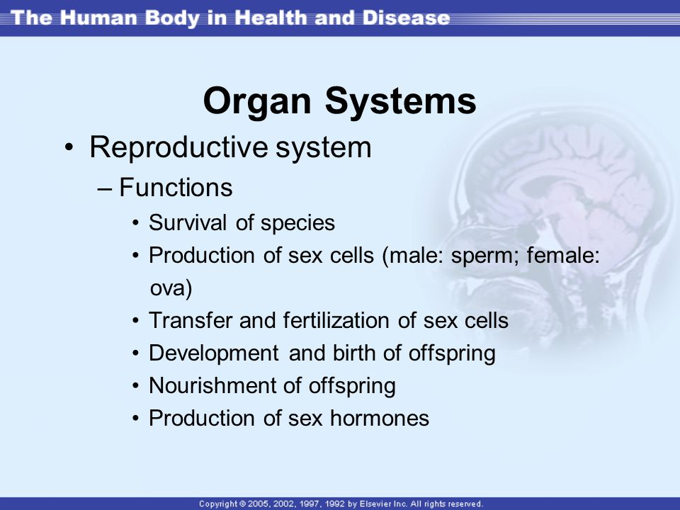 Organ Systems Reproductive system Functions Survival of species