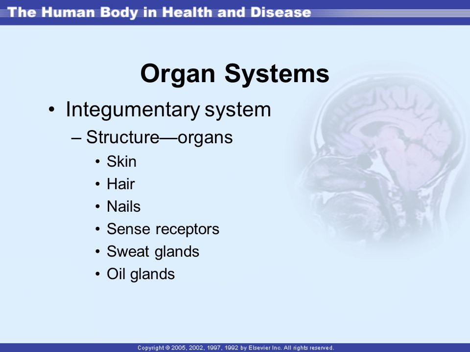 Organ Systems Integumentary system Structure—organs Skin Hair Nails