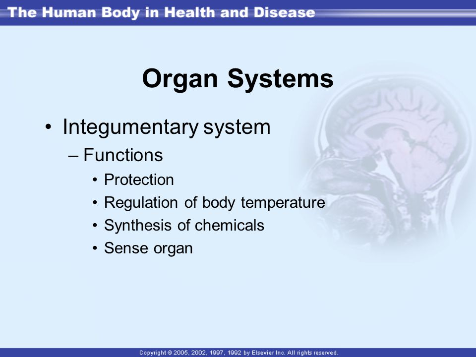 Organ Systems Integumentary system Functions Protection