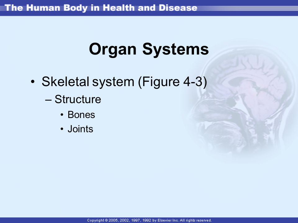 Organ Systems Skeletal system (Figure 4-3) Structure Bones Joints