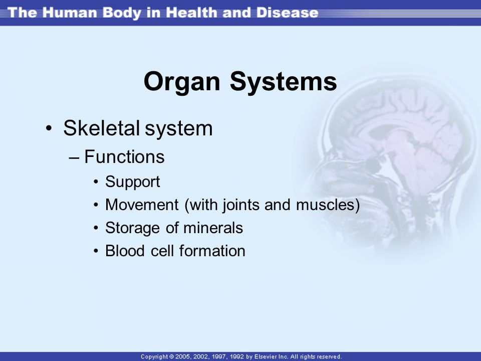 Organ Systems Skeletal system Functions Support