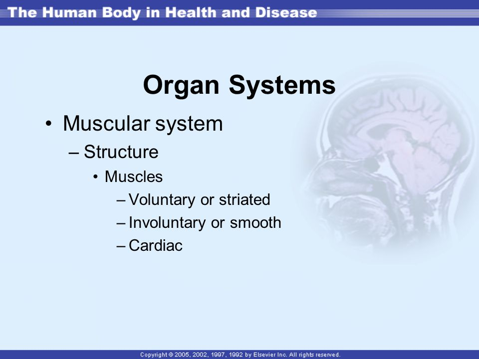 Organ Systems Muscular system Structure Muscles Voluntary or striated