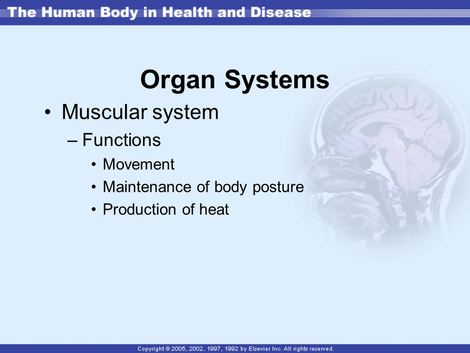 Organ Systems Muscular system Functions Movement