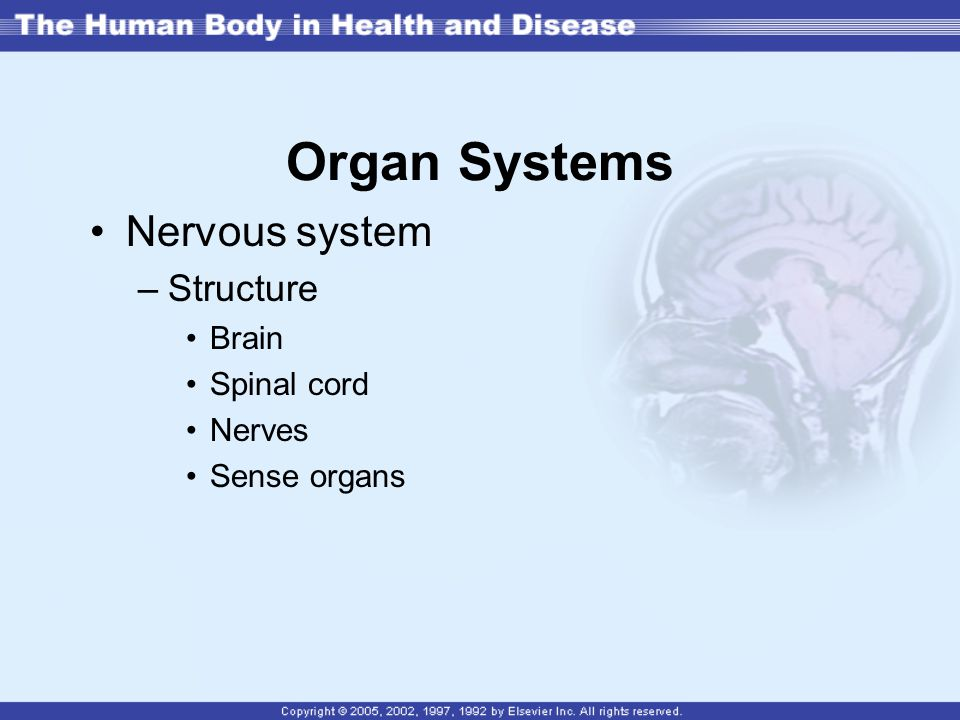 Organ Systems Nervous system Structure Brain Spinal cord Nerves