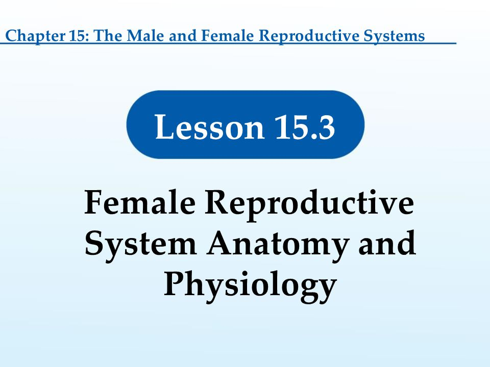Atractivo Anatomy And Physiology Reproductive System Practice Test ...