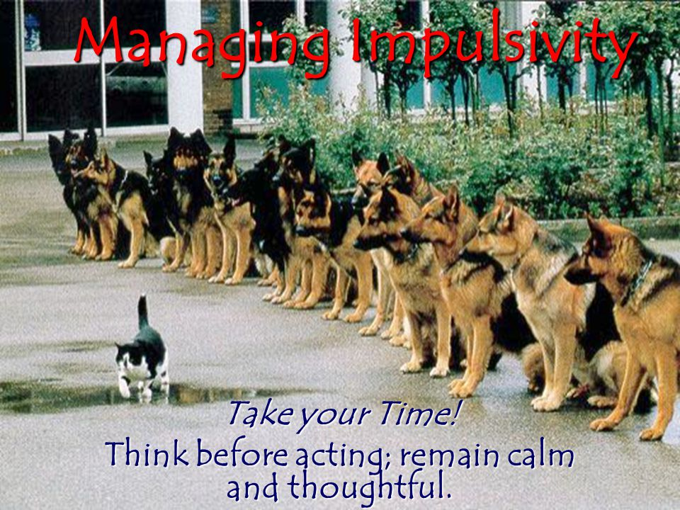 Take your Time! Think before acting; remain calm and thoughtful.