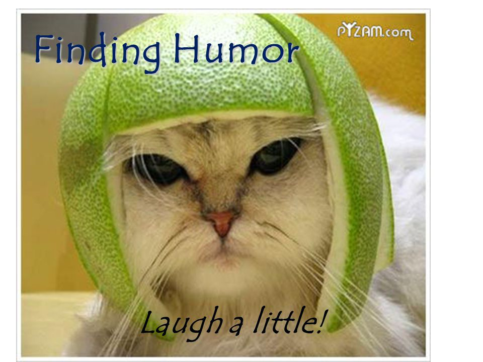 Finding Humor Laugh a little!