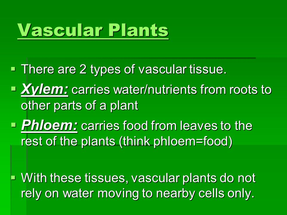 How are plants sorted into groups ppt video online download vascular plants there are 2 types of vascular tissue xylem carries waternutrients 10 venn diagram ccuart Image collections