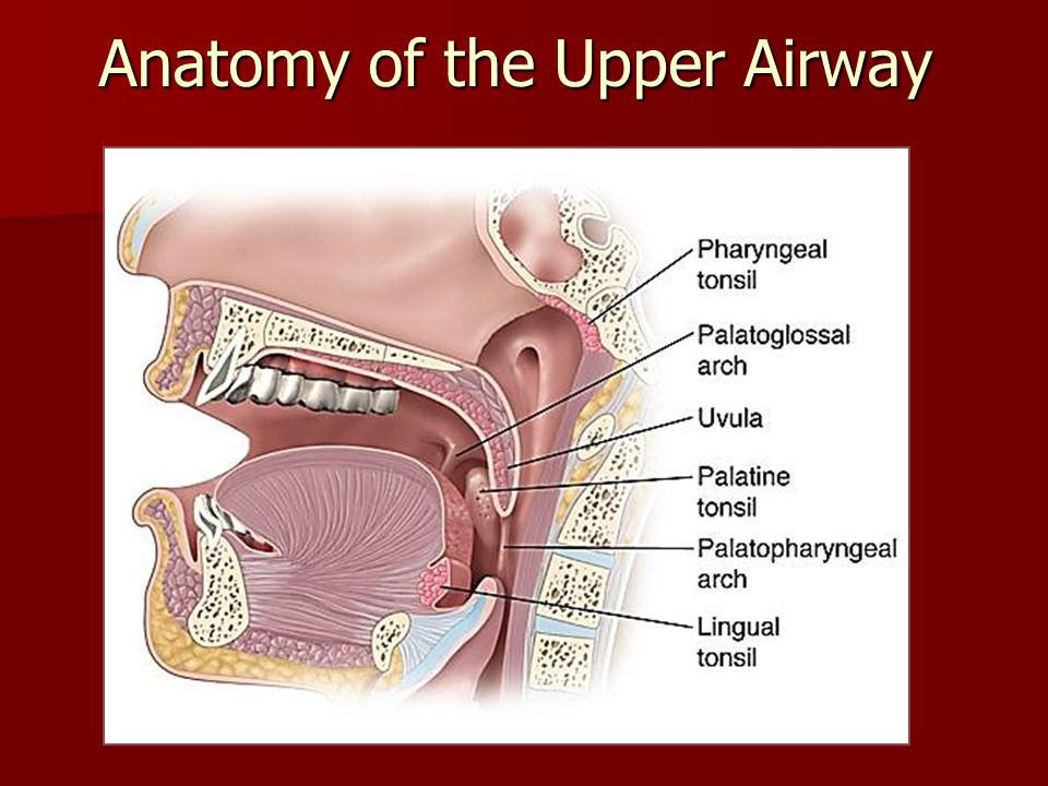 Old Fashioned Airway Anatomy For Intubation Pattern - Anatomy And ...