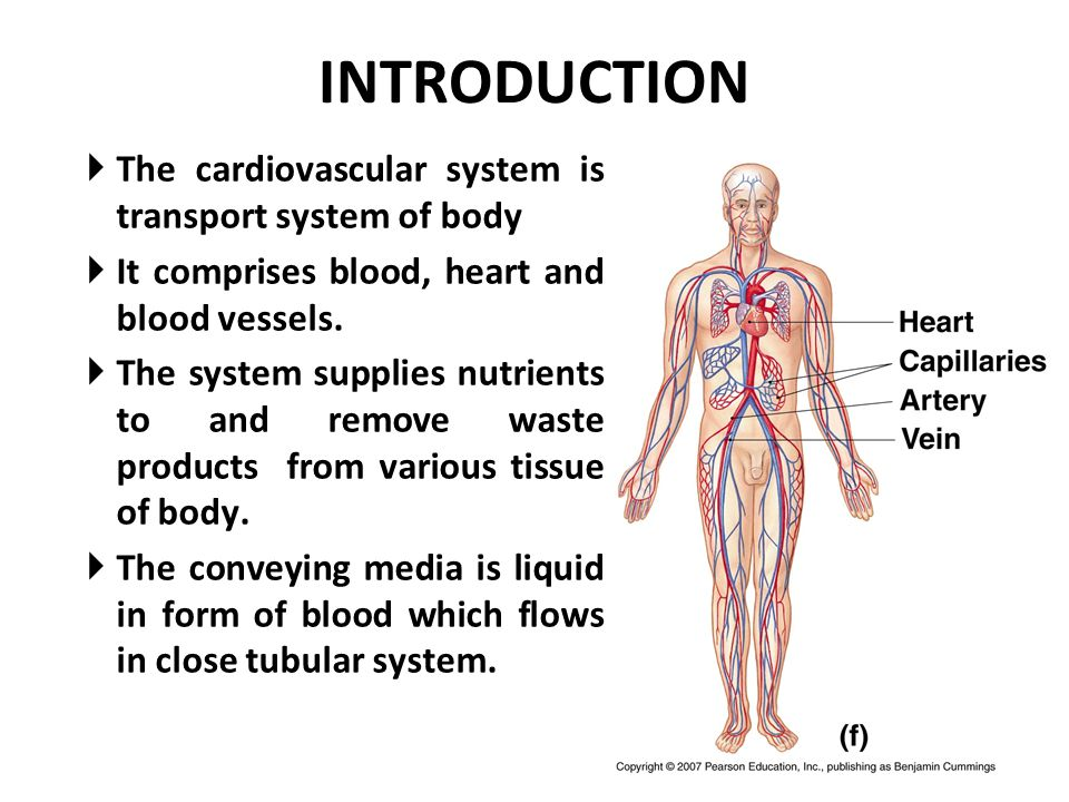 Introduction To The Human Cardiovascular System Ppt Video Online
