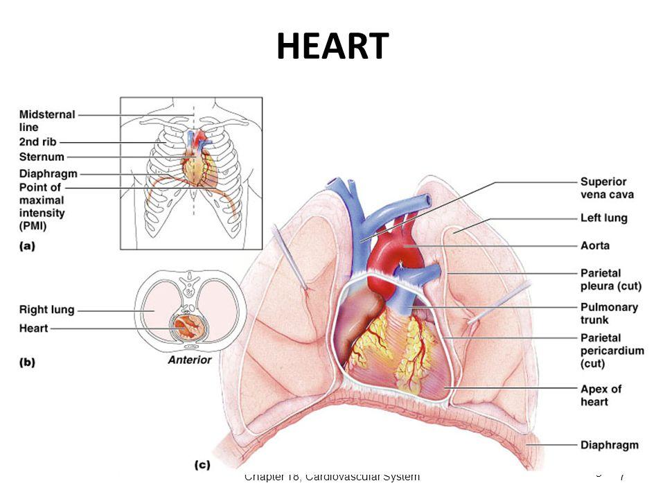 Ear Anatomy Diagram Human Circulatory System Block And Schematic