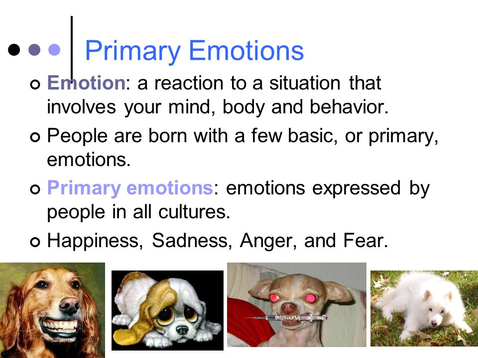 Primary Emotions Emotion: a reaction to a situation that involves your mind, body and behavior.