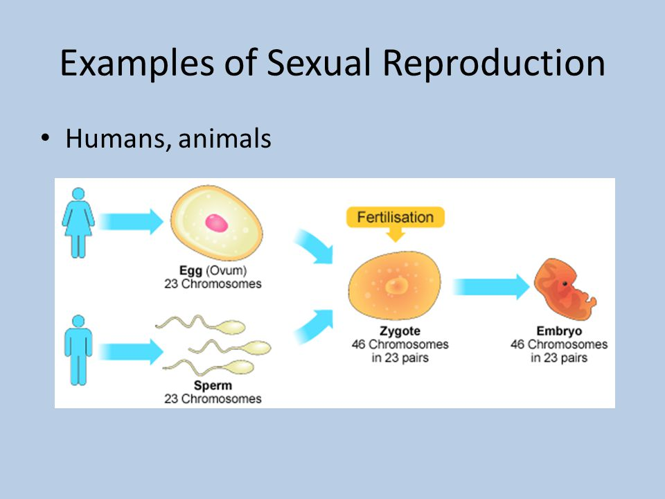 Asexual and sexual reproduction in plants