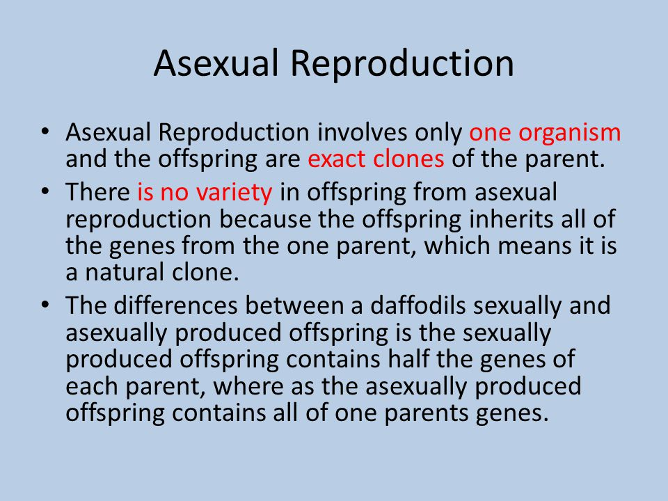 Why is the offspring of asexual reproduction a clone pic 22