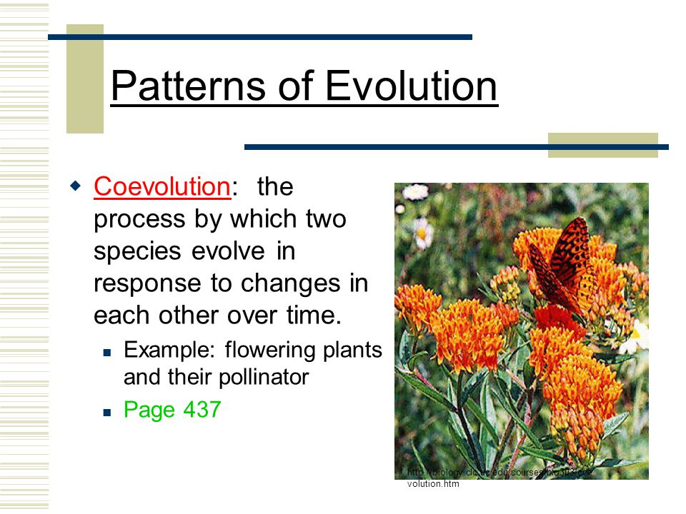 reciprocal coevolution and plant pollinator interactions The word coevolution speaks to organisms or systems that have interacted in ways that have influenced their evolution over time wasp as its agent for pollination in a competitive and ongoing coevolutionary relationship, the common garter snake continually evolves new levels of immunity to.