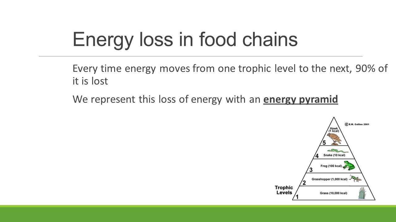 Energy loss in food chains