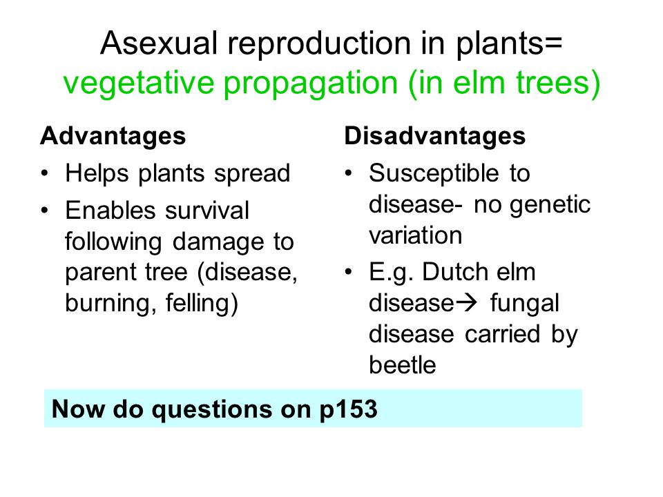 Examples of vegetative propagation asexual reproduction in fungi