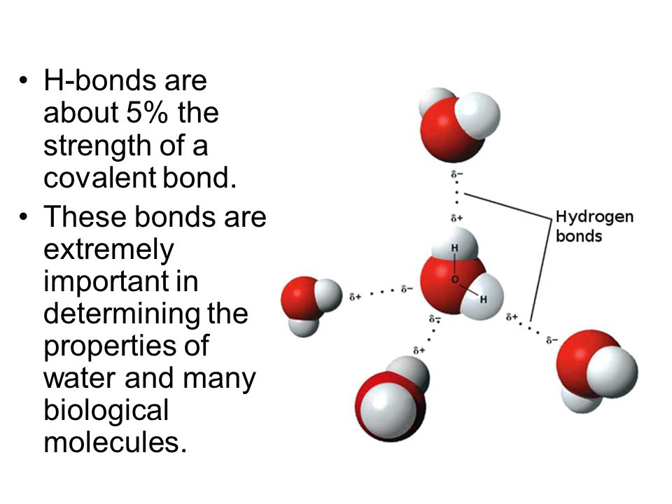 H-bonds are about 5% the strength of a covalent bond.