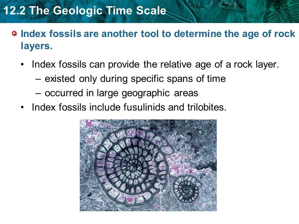 Index fossils are a tool used in