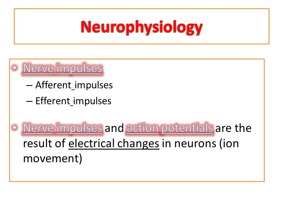 Neurophysiology Nerve impulses