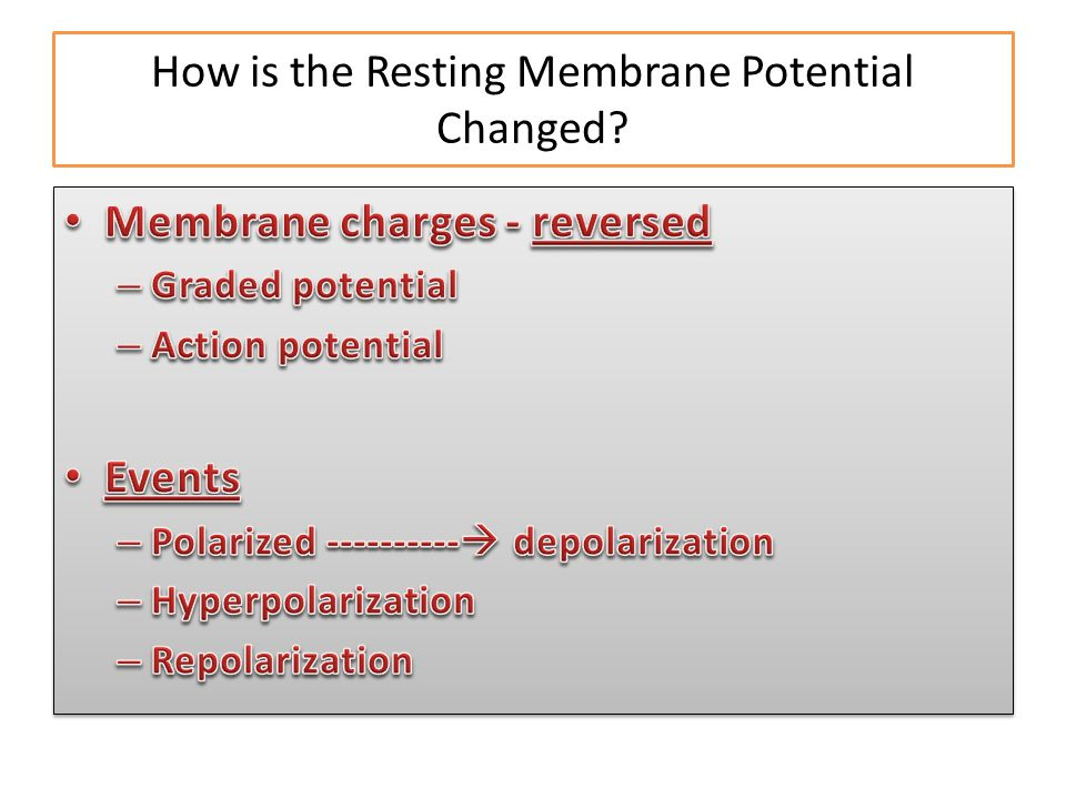 How is the Resting Membrane Potential Changed