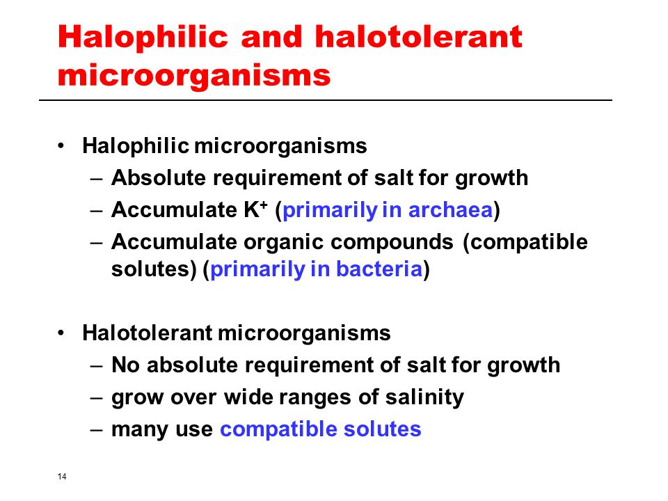 Halophilic and halotolerant microorganisms
