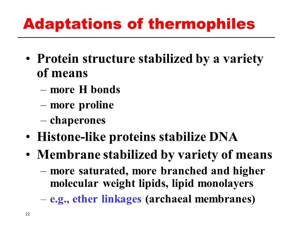 Adaptations of thermophiles