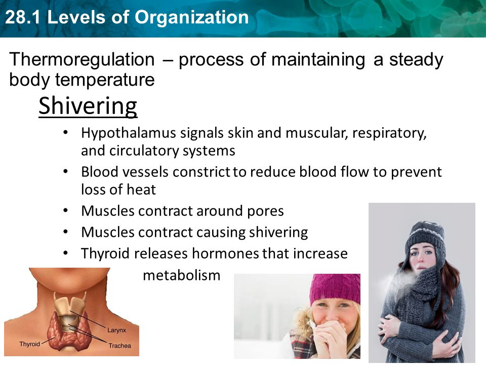 Thermoregulation – process of maintaining a steady body temperature